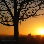 Tree & Liverpool at Sunset - Anna Nielsson
