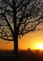 Tree & Liverpool at Sunset