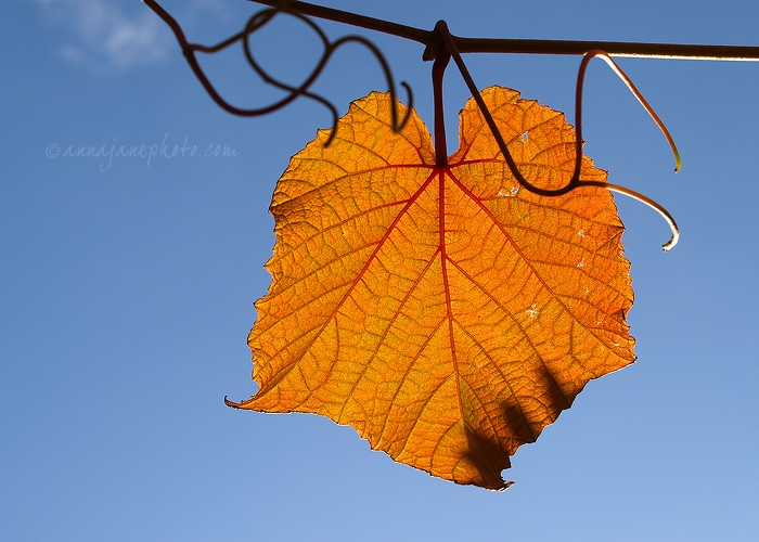 Leaf & Sky - 20091012-leaf-and-blue-sky.jpg - Anna Nielsson