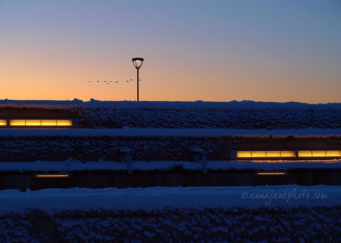Geese in Flight - 20100106-geese-sunset.jpg - Anna Nielsson
