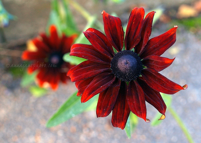 Red Flowers - 20101024-red-flowers.jpg - Anna Nielsson