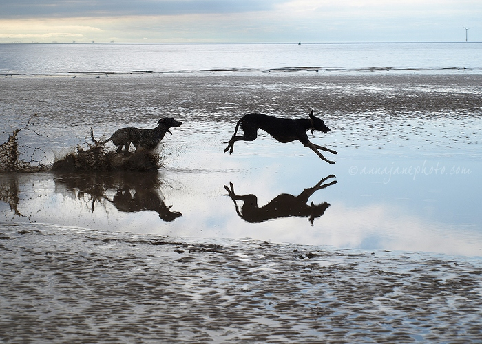 Leap - 20110321-leaping-dogs.jpg - Anna Nielsson