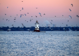 Conimicut Light & Birds