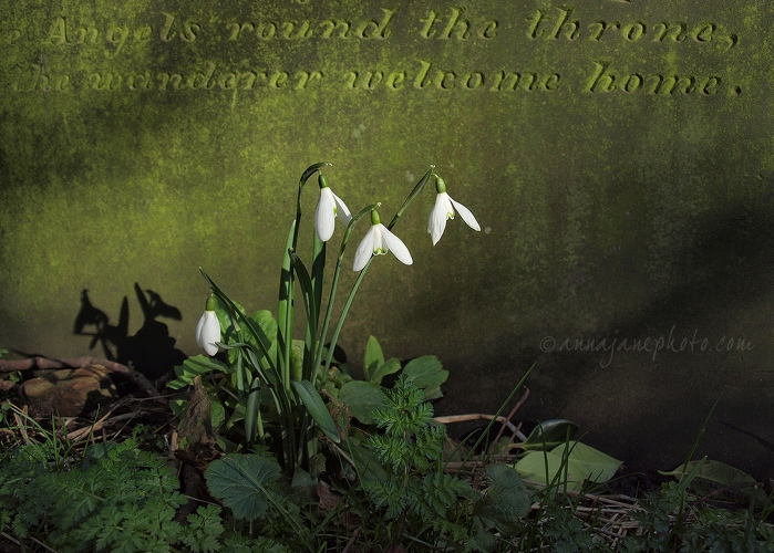 The wanderer welcome home. - 20140216-snowdrops-and-gravestone.jpg - Anna Nielsson