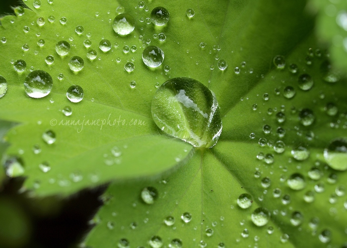 Droplets - 20140629-leaf-droplets-2.jpg - Anna Nielsson