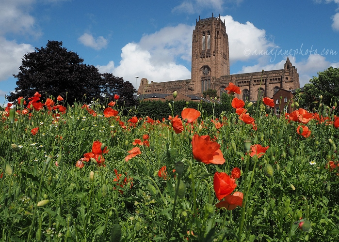Cathedral & Poppies - 20140713-liverpool-cathedral-and-poppies.jpg - Anna Nielsson