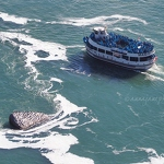 Maid of the Mist & Cormorants - Anna Nielsson