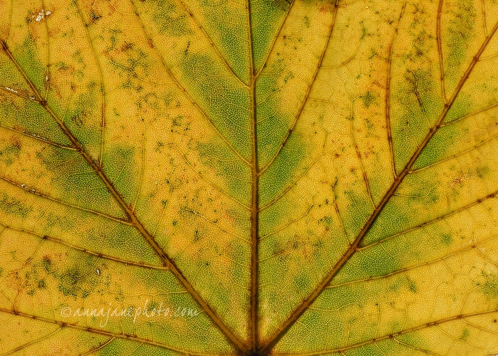 20151001-yellow-green-leaf.jpg