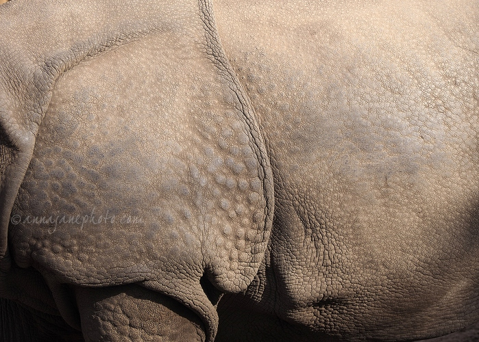 Greater One-Horned Rhinoceros Skin - 20160314-greater-one-horned-rhinoceros-skin-2.jpg - Anna Nielsson