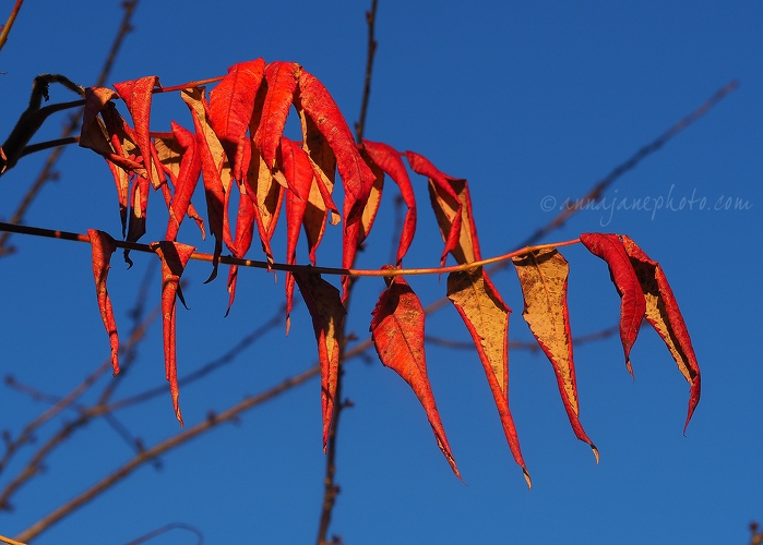 20161125-red-leaves.jpg