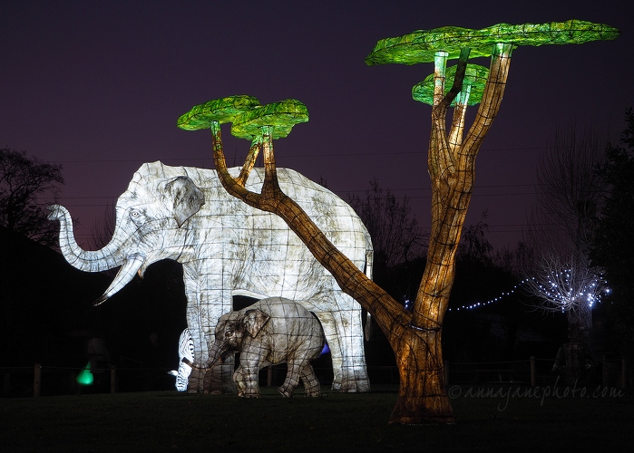 20161125-elephant-lanterns-chester-zoo.jpg