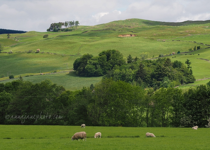 Moniaive Countryside - 20170530-moniaive-countryside.jpg - Anna Nielsson