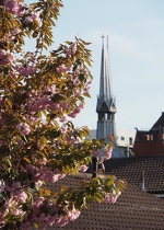 Nordic Church and Blossom