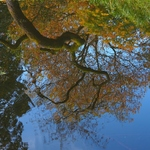 Autumn at Sefton Park