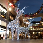 Light Reindeers - Anna Nielsson