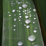 Droplets - Anna Nielsson